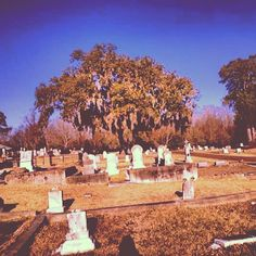 Natchez City Cemetery #throughglass #googleglass #glass