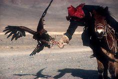 The Golden Eagle Hunters of Mongolia.
