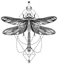 Resultado de imagem para desenho científico libélula