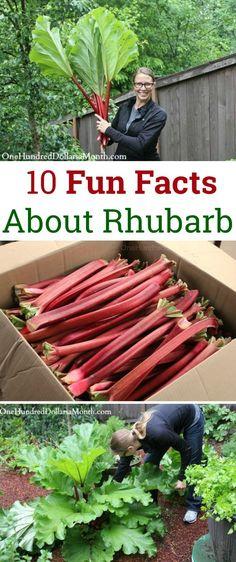 Fruit Garden, Edible Garden, Garden Plants, Rhubarb Plants, Rhubarb Rhubarb, Organic Gardening, Gardening Tips, Vegetable Gardening, Veggie Gardens