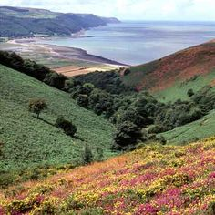 Exmoor, Somerset, UK famous for Cheddar cheese and Cider amongst many other things.