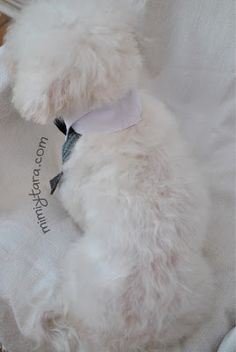 perro con smoking