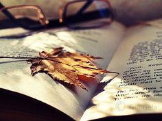 fall season tumblr | Be The One: Introducing the fall