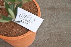 FREE printable: hand-lettered and hand-illustrated olive tree gift tags!