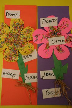 Lee's Kindergarten: Farm-The Latter Half Kindergarten Themes, Kindergarten Science, Science Classroom, Parts Of A Flower, Parts Of A Plant, Farm Day, Teaching Time, Teaching Ideas, Farm Projects