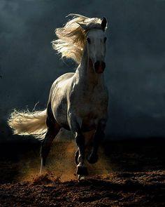 Cavallo che inciampa e non cade, è buon segnale.... web