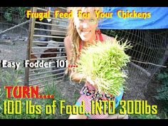 How Karl Hammer Feeds 600 Chickens? TRY FODDER INSTEAD!