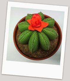 kaktus diy Home, diy flanel home diy pin cushions Buying Birkenstock Sandals A Nylon Flowers, Felt Flowers, Diy Flowers, Paper Flowers, Cactus Craft, Cactus Decor, Stone Cactus, Painted Rock Cactus, Felt Succulents