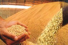 O preço da soja na Bolsa de Cereais de Chicago registrou na segunda-feira (31/8) alta de 2 centavos de dólar nos contratos de Novembro/15, fechando em US$8,87 por bushel. O contrato de Janeiro/16 subiu 1,50 centavo de dólar - a mesma valoriza�