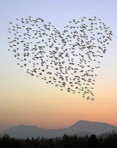 Heart made with birds in the sky how cool is this I love it                                                                                                                                                     Mehr