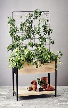 Image result for cultura plantagen Bar Set Furniture, Plants, Image, Plant, Planets