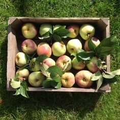 Onze appeloogst