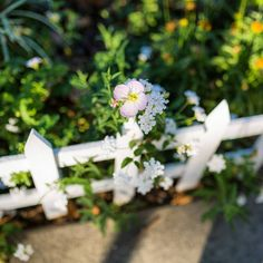 """Found my """"#WhitePicketFence"""" in #LaLaLand, w/a #Pretty #Flower  peeking through  :) ☺ So, it's only a few inches high, whatever, haha:)   Do you have a White Picket #Fence around your #Home?:)   Pic: #JamminJo 2017"""