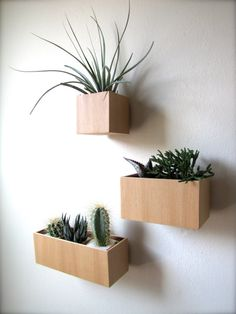 "Set of THREE Hanging Wall Plant Holders in VG Fir wood, includes 3""x3""x3"", 5""x3""x3"", and 8""x3""x3"" sizes, air plants available for added cost..."