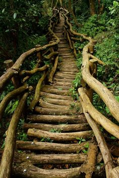 a walk in the woods - an awesome tree staircase!!