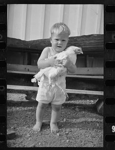 Photo Prompts #028: Chicken With Boy. Click the photo for story starters and more. Photo Credit: Library of Congress, LC-USF33-T01-000655-M4.