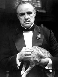 The Godfather. Marlon Brando found this stray cat on the studio lot and the rest is history he made the cat a star, hey that's my cat Butterscotch and his fee for one scene is a million dollars, please make the check payable to Thomas Allmon, thank you very much.