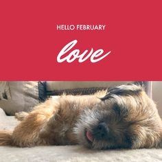 What a wonderful world it would be, if people had hearts like dogs ❤️ #borderterrier #dogquotes #bestfurryfriend #love