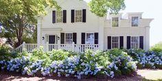 hydrangea bushes | New England Home Magazine