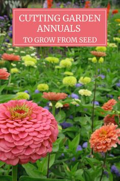 Garden centers offer plants with broad appeal, so you'll rarely find interesting annuals such as salvia horminium, zinnia Queen Lime Blush or amaranth Oeschberg. Yet these are the annual flowers that Growing Flowers, Cut Flowers, Growing Zinnias From Seed, Planting Flowers From Seeds, Easiest Flowers To Grow, Cut Flower Garden, Flowers For Cutting Garden, Cut Garden, Zinnia Garden