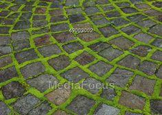 Moss Growing Between Cobblestone Pavers Stock Photo
