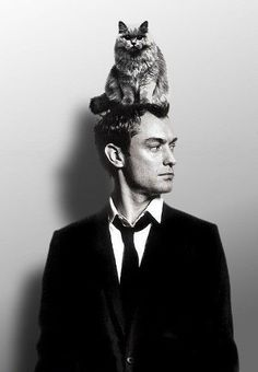 Jude Law cat on head Jude Law, Celebrities With Cats, Celebs, Crazy Cat Lady, Crazy Cats, I Love Cats, Cool Cats, Men With Cats, Animal Gato