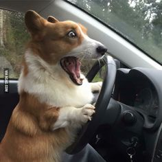 When my wife driving.
