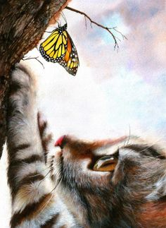 cat and mariposa