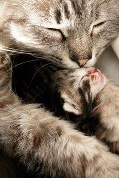 Love...  #cats #kittens