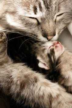 Love...  #cats #kittens