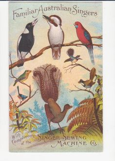 This postcard is a satirical take on the Singer Sewing Machine Co. And was used as a sales rep's calling card with the appointment date and time on the back. The Australian birds include the iconic Lyrebird and the Kookaburra. The postcard is from the 1920s.