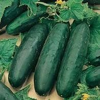 CUCUMBER - Marketmore - 50 SEEDS by Haddons, http://www.amazon.co.uk/dp/B001SAAPMY/ref=cm_sw_r_pi_dp_aUaArb0YNK5CG