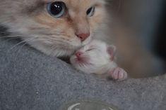 little kitten neva - 1 day
