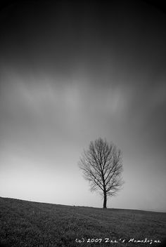 Winter Tree #winter #tree Winter Trees, Clouds, Celestial, Sunset, Country, Random, Pictures, Outdoor, Style