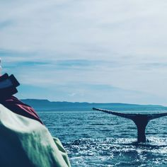 Tag a friend to go whale watching with you! #travel #adventure #whalewatching #ocean  Follow @ilovetravelbugblogger