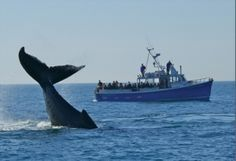 .~Whale watching, Nova Scotia. I've actually done this and it is truly amazing@adeleburgess~.