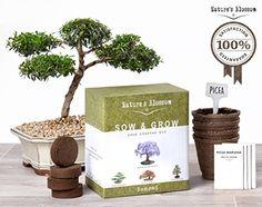 Natures's Blossom Sow and Grow 4 Bonsai Trees Germination - http://freebiefresh.com/naturess-blossom-sow-and-grow-4-review/
