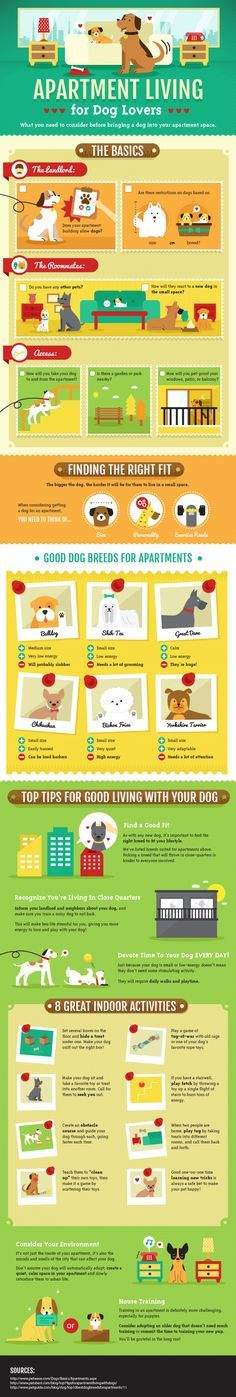 Apartment Living for Dog Lovers --ideas to make the space better for both of you.