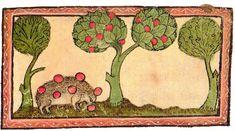 A hedgehog stealing apples. Latin bestiary Cambridge, 1320.