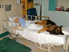 犬病院のベッド