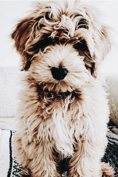 Darling Doggo - Darling Dog I Cute Puppies, Cute Dogs, Dogs And Puppies, Doggies, Amor Animal, Mundo Animal, Animals And Pets, Cute Animals, Funny Animals