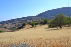 Another picturesque scene in the valley below the #cypriot #village of #marathounta - really wanted to run through this field but I was worried about snakes hah #marathounda #cyprus #paphos #pafos #nature #natureart #nature_perfection #naturelover #nature_shooters #naturelovers #natureaddict #natureshots #naturephoto #naturephotography #natureporn #naturegram #countryside #countrysidelife #countrysideliving #mediterranean #likeforlike #l4l #like4like #followforfollow #f4f by…
