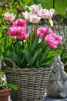 Mon Jardin Mes Merveilles: Tulipes 2015 : Duo pour un panier Indoor Gardening Supplies, Container Gardening, Pink Garden, Dream Garden, Spring Bulbs, Deco Floral, Spring Flowers, Garden Inspiration, Beautiful Gardens