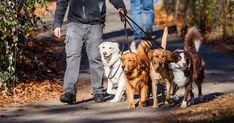 犬を飼うための費用は200万円です【最新版】 - いぬのみみ Supplemental Health Insurance, Health Insurance Cost, Big Dogs, Cute Dogs, Vancouver Things To Do, Dog Walking Business, How To Attract Customers, Pet Grooming, Doge