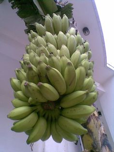About Plantains - Nutrition Facts, Nutritional, Health Benefits And Some Plantains Recipes