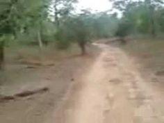 Jungle Safari: Rajaji National Park - Rishikesh