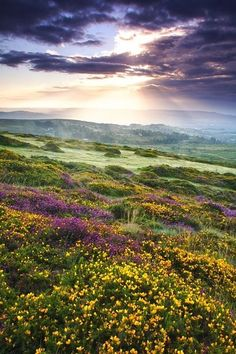 Dartmoor National Park, Devon     posted by www.futons-direct.co.uk