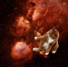 猫、宇宙に行く!