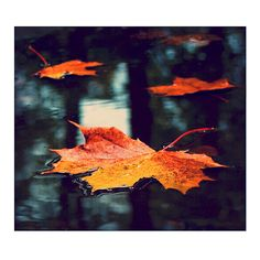 imageGx ❤ liked on Polyvore featuring backgrounds and autumn