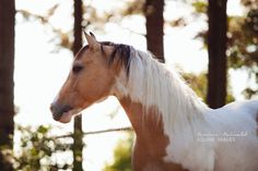 summer horse equine stallion equine photography western Horse ...